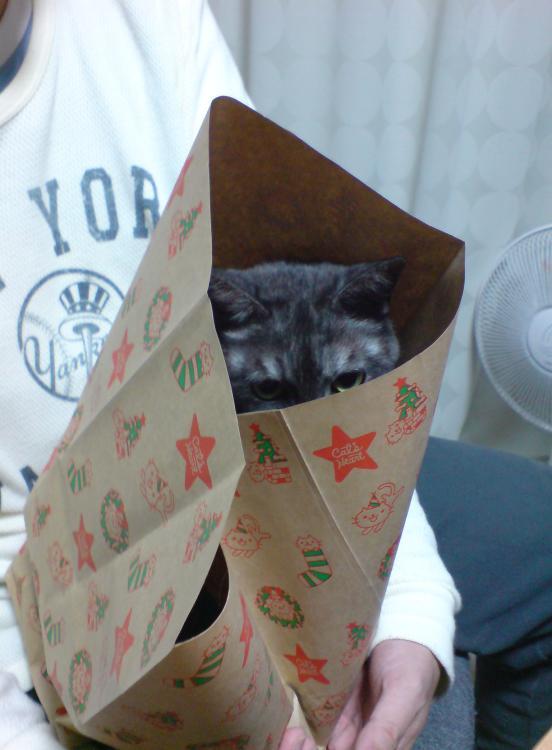 猫が袋に入ってる-012