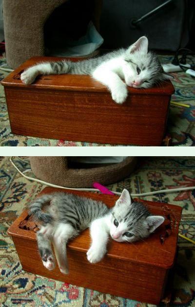 猫が袋に入ってる-038