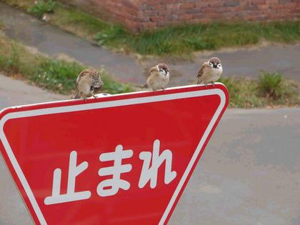 鳥の画像ください-036_1