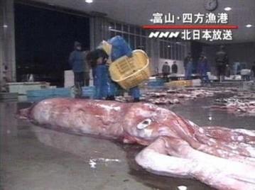 巨大生物koe-018