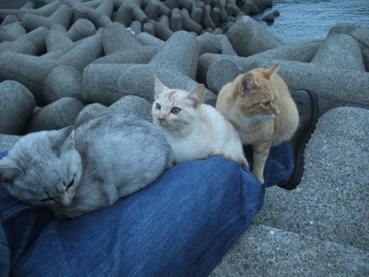 猫飼いたくなるね-025