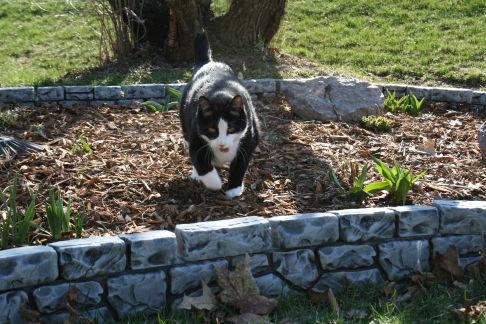 カッコいい猫の画像-170