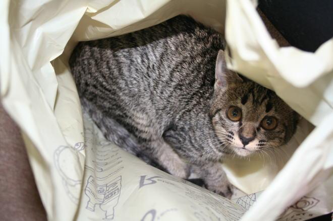 猫が袋に入ってる-006