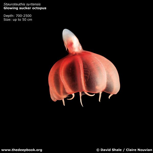 海に住む奇妙な生き物の画像-033_7