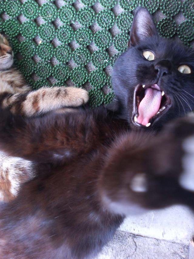 カッコいい猫の画像-155