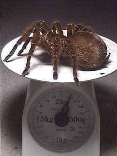 世界で一番の生き物-103