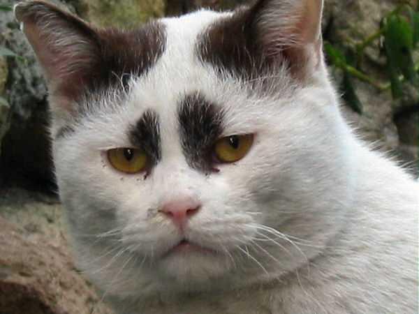 カッコいい猫の画像-133_2