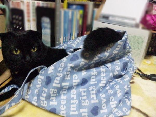 猫が袋に入ってる-151