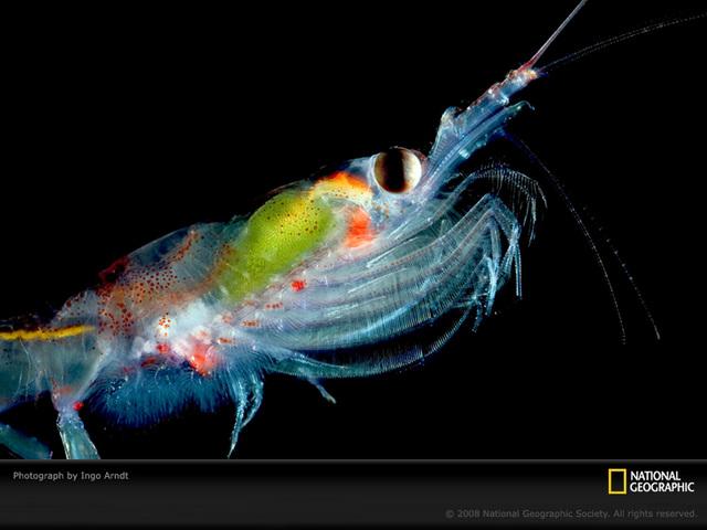 海に住む奇妙な生き物の画像-044_4