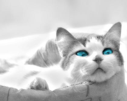 ネコの画像ください-029