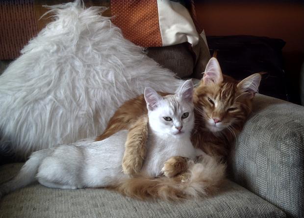 カッコいい猫の画像-126_1
