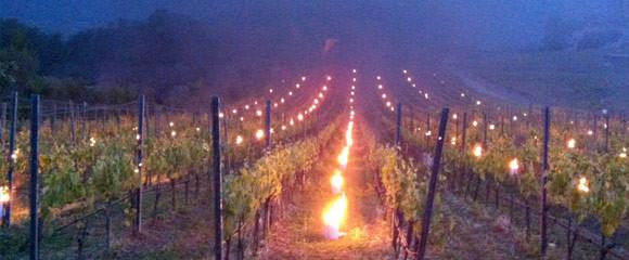 die Winzer Kerzen/ワイン農家の灯