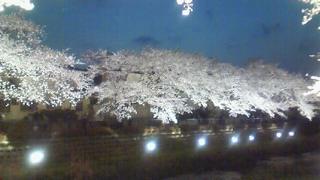 調布の野川夜桜ライトアップ2010年4月6日