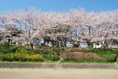 桜吹雪 152