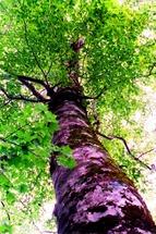 ブナの緑は一際鮮やかである