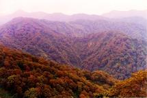 白神山地は見渡す限りのブナの森が広がる