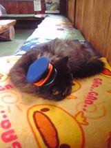 私が訪れた時ばす名誉駅長はお疲れでお昼寝中だった