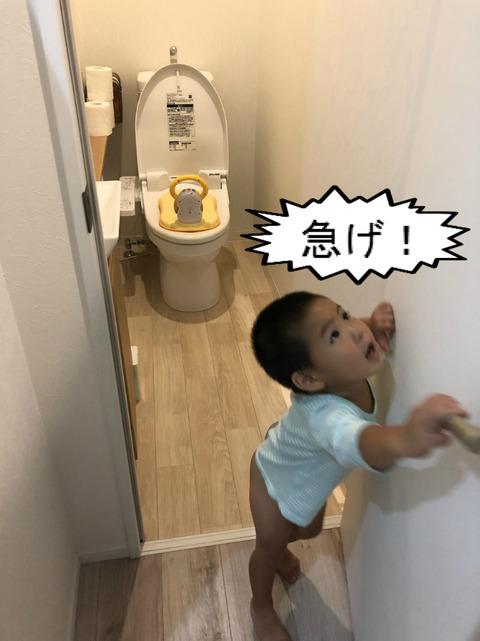 どーすれば、トイレにちゃんと行くようになるんやろか。。。
