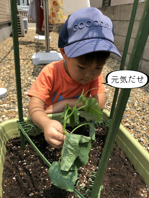 庭で野菜を育ててみよう!