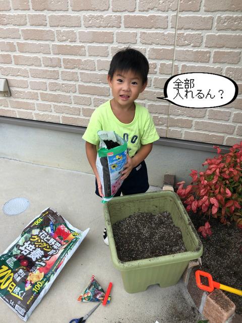 家庭菜園! きゅうりの次は、いちご作り! ②完