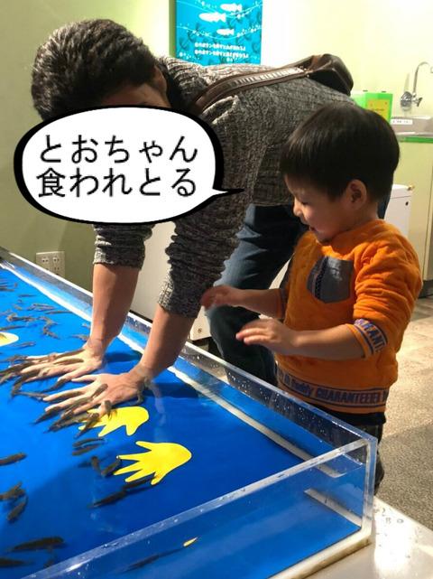 地味やと思ったら、意外と楽しかった水族館! ②