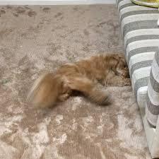 イヌ? ネコ? はっちゃん!