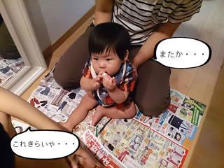 赤ちゃんのくせに何回目??はっちゃんの散髪。