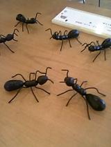 ヒロミチのアリ