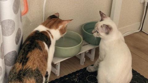 7※琥太郎水の飲み方を学ぶ Learn how to drink water