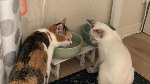 4※琥太郎水の飲み方を学ぶ Learn how to drink water