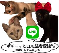 LINE読者登録画像