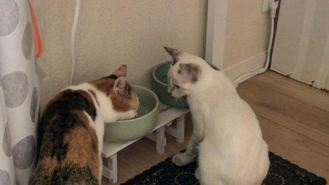 ※琥太郎水の飲み方を学ぶ Learn how to drink water