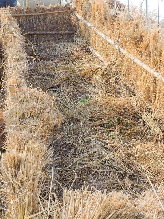 山田農場|踏み込み温床作り-3