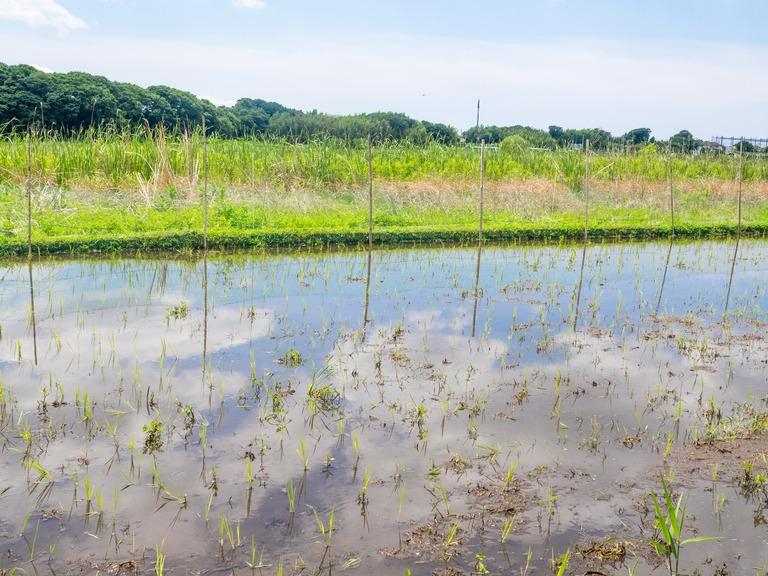 山田農場の一年・六月(山田さんの田んぼ-2)