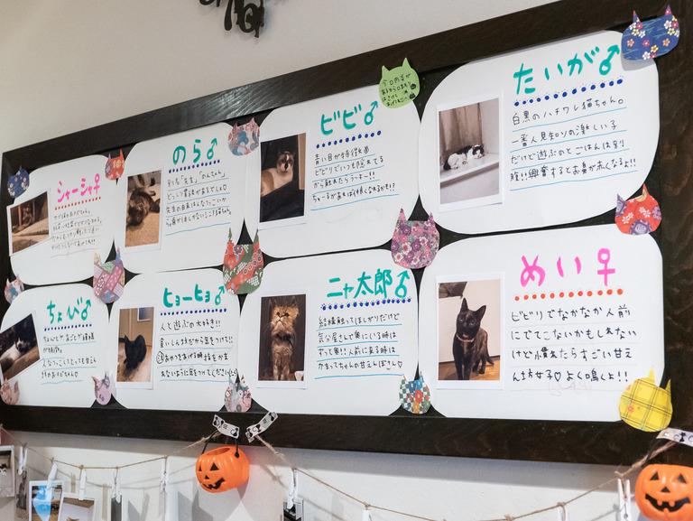 高根公団_猫かふぇ_和風猫本舗_2
