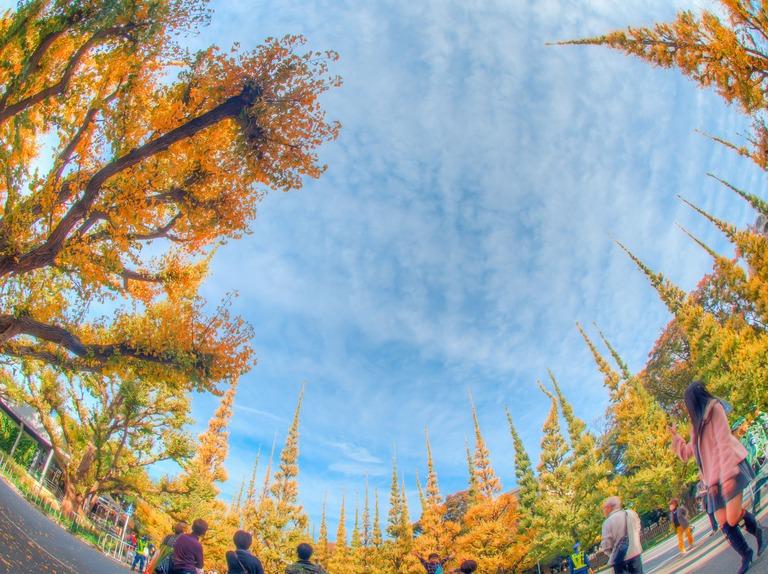 神宮外苑いちょう並木20151121-3