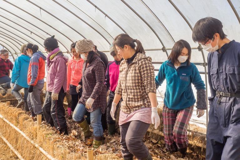 山田農場|踏み込み温床作り-11
