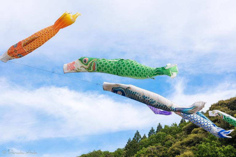 千葉県香取市|いきいき山田・鯉のぼりまつり-2