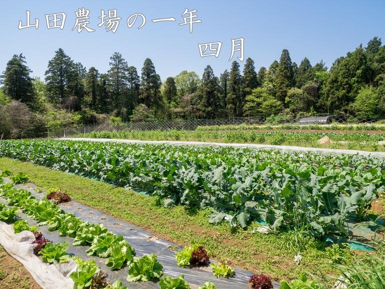 山田農場の4月(タイトル)