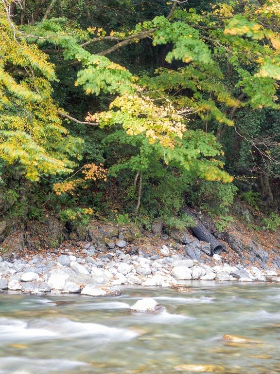奥多摩の紅葉2015|氷川渓谷-3