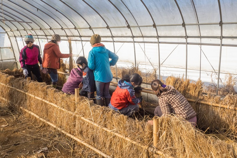 山田農場|踏み込み温床作り-2