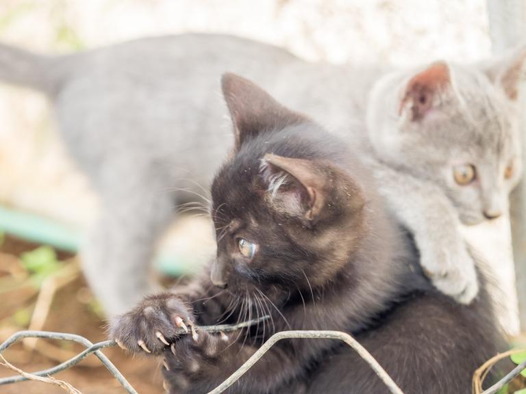 山田農場の一年:9月 稲刈り‐3(仔猫の兄弟)