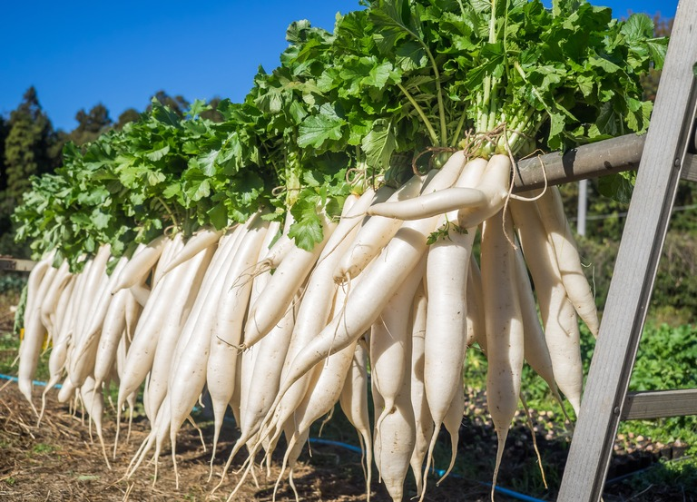 山田農場の一年・十一月|たくあん作り-13