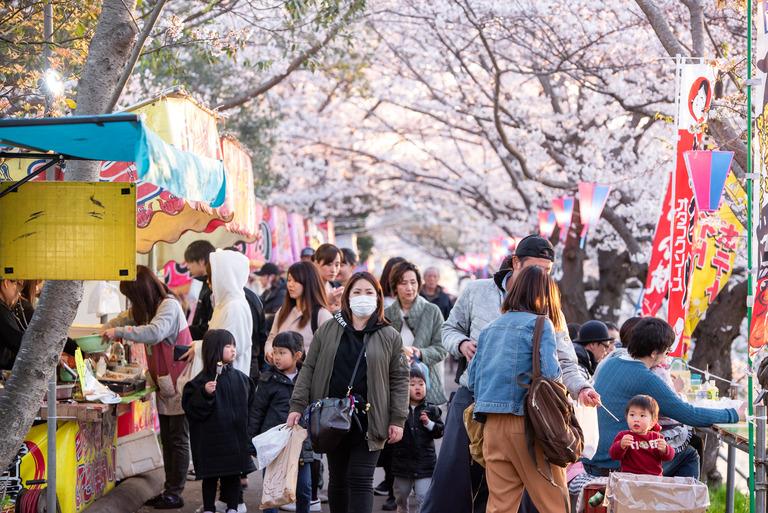 海老川の桜と屋台