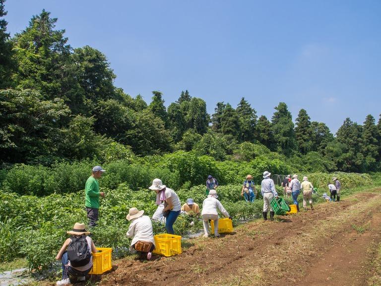 山田農場の一年・7月‐1