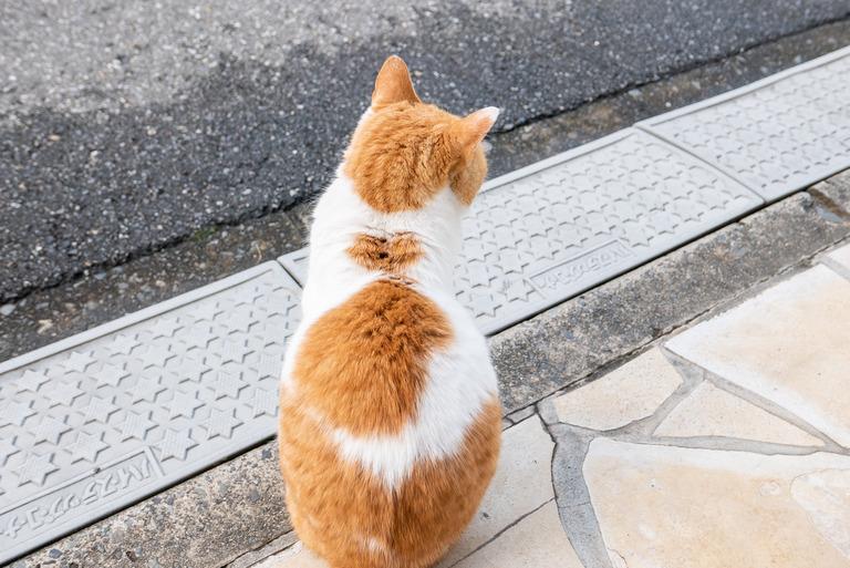 近所の猫_1