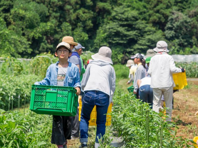 山田農場の一年・7月‐11