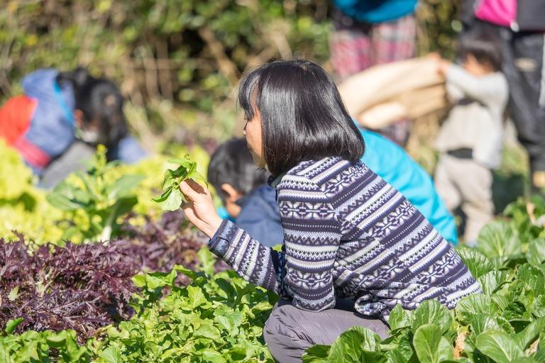 山田農場|冬野菜の収穫-3