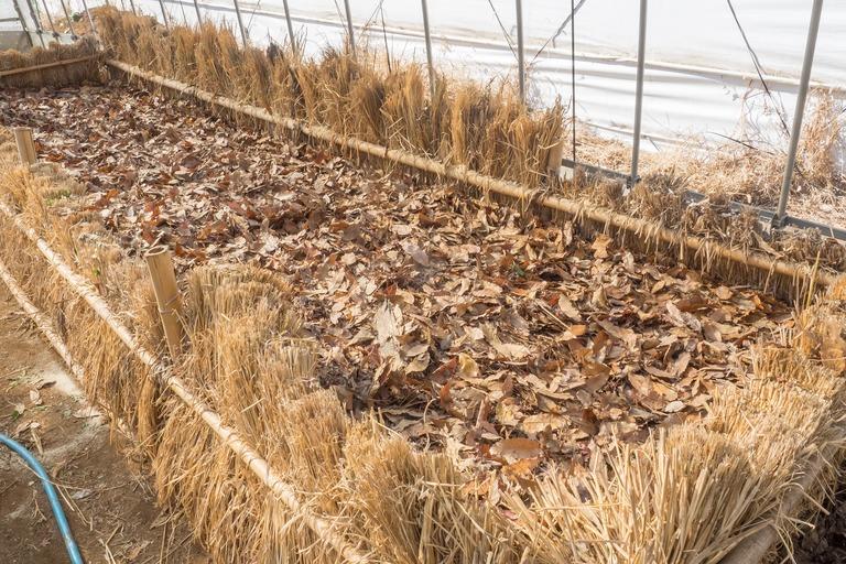山田農場|踏み込み温床作り-12