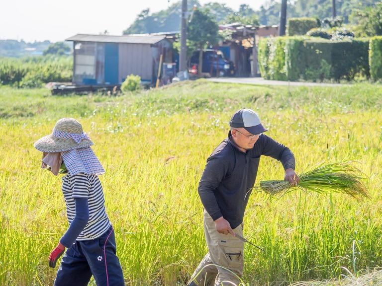 山田農場の一年:9月 稲刈り‐7